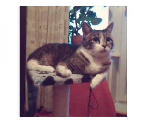Котик Вася ищет дом