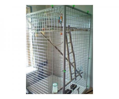 Клетка-вольер для больших птиц- попугаев, сов, ворон