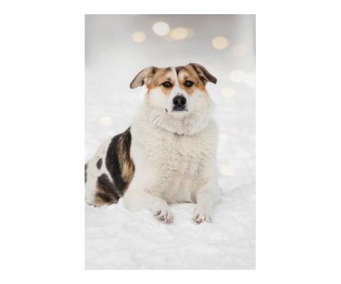 Спокойная умница Плюша — будет идеальной первой собакой