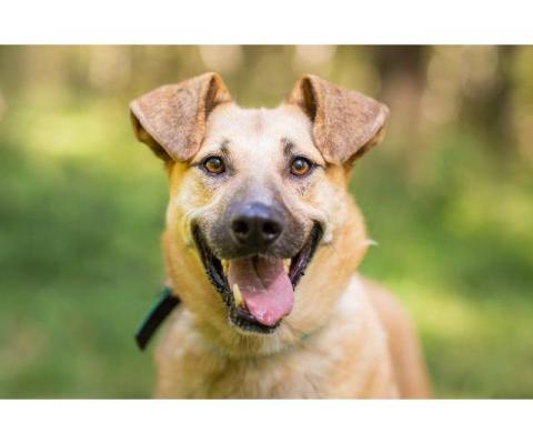 Зита. Самая преданная собака в поисках семьи