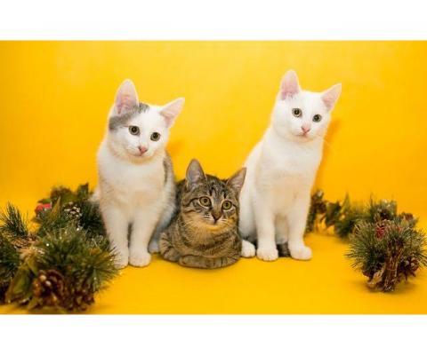 Очаровательные котейки в дар