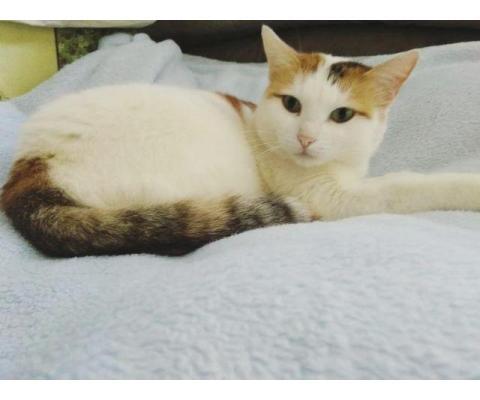 Кошка Лиза в добрые руки