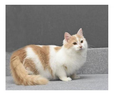 Три очаровательных котенка ищут дом.