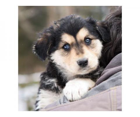 Очаровательные щенки в дар