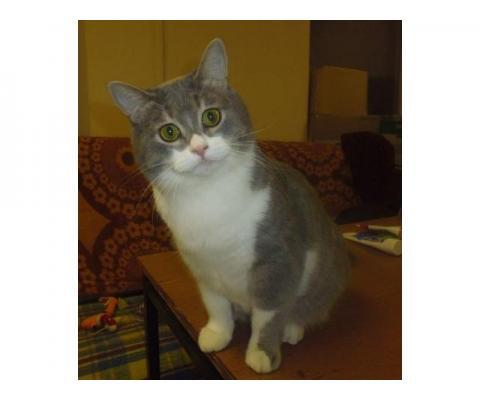 Пристраивается котик Нафаня