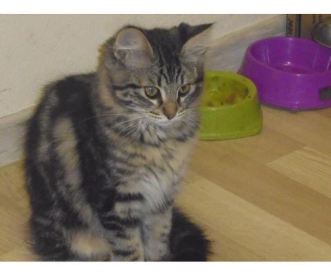 Симпатичные котятки-кошечки в дар
