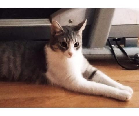 Симпатичные котейки, возраст 11 месяцев, ищут хозяев
