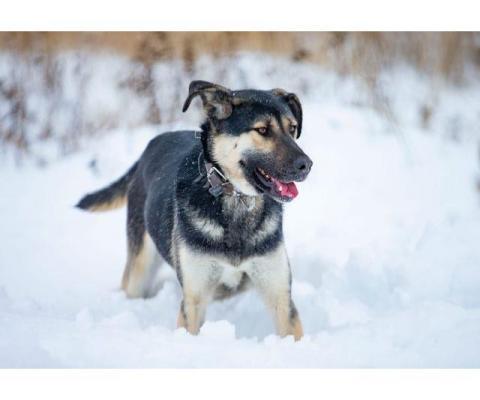 Озорной и весёлый пёс ищет любящих хозяев