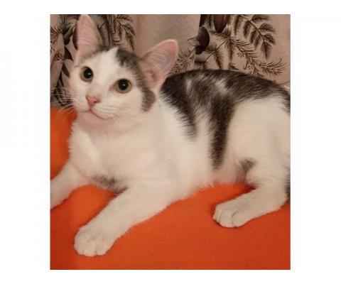 Милашка Маркус кот-полоскун ищет свою ванную