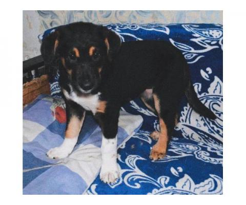 Афина - щенок ищет дом