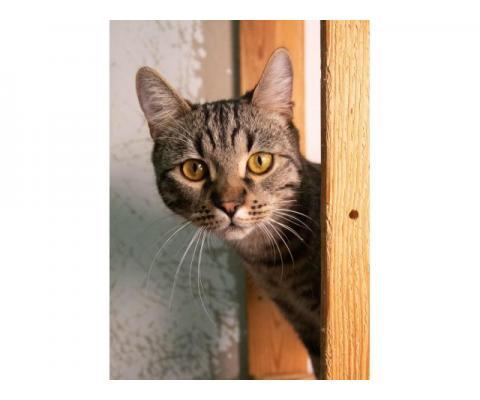 Шикарный кот ищет дом