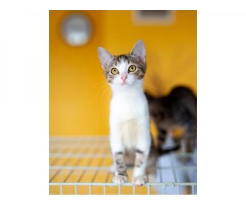 Симпатичные котейки ищут дом