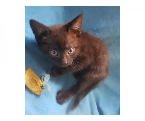 Симпатичные маленькие котята  ищут хозяев