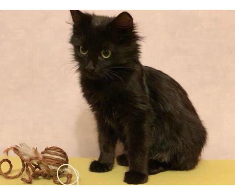 Этот котенок приехала к нам из Астрахани
