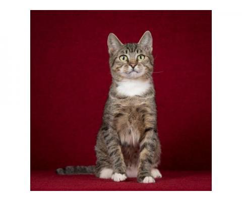 Котопёс Барса — удивительная кошка с удивительной историей ищет дом