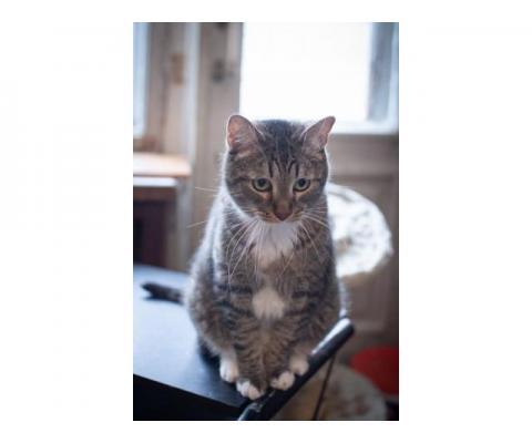 Кот Меся в дар