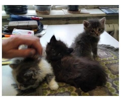 Симпатичные маленькие котятки в дар