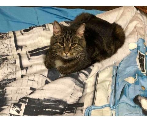 Ищу любящую семью для взрослого кота