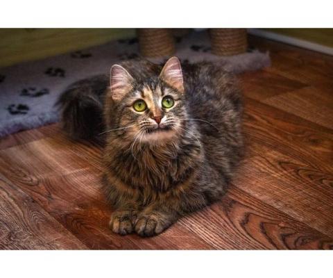 Кошечка Пелагея в поиске дома и семьи!