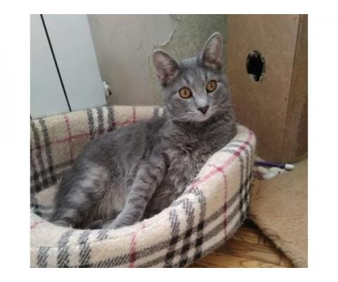 Пристраивается светло-серый котик Савушка