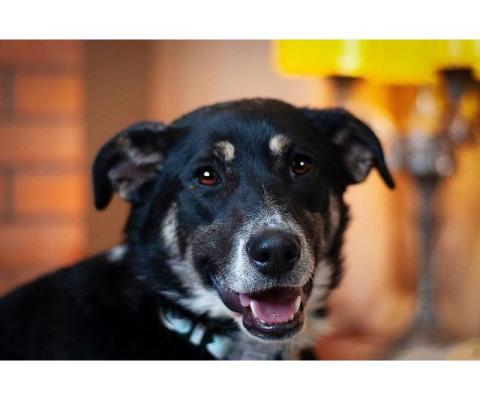 Ласточка — очаровательная собака в дар