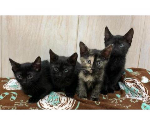 Котята  и их мамочка в добрые ручки!!!