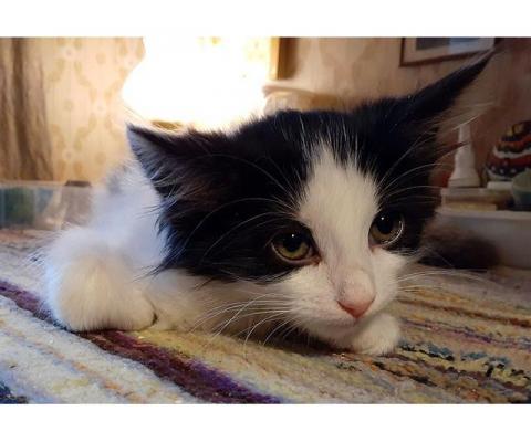 Котенок  Бимка, спасенный из ямы - ждет самых любящих хозяев!
