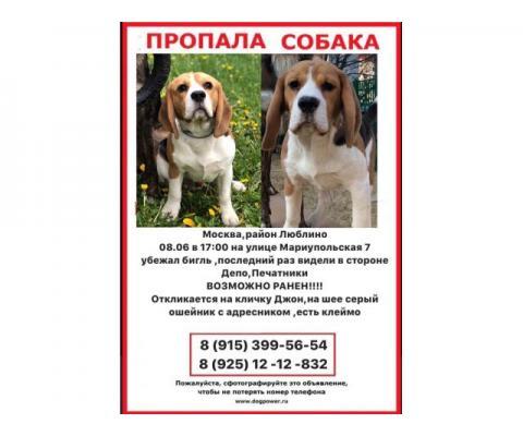 Помогите найти собаку!