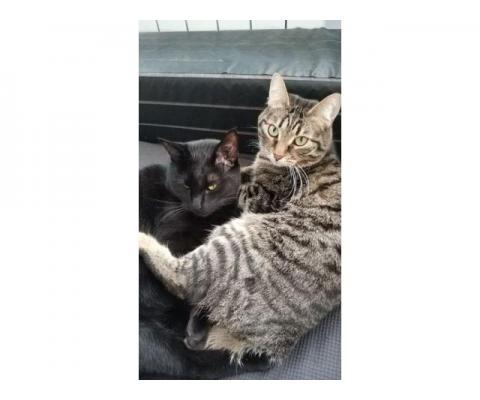 Cимпатичные  котики-неразлучники ищут дом