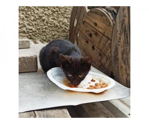 Чёрный котенок в добрые руки