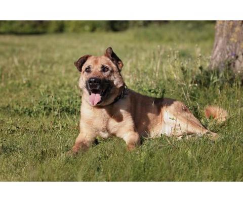 Солнечный Рыжик, пес спасенный с пром. зоны, ищет дом!