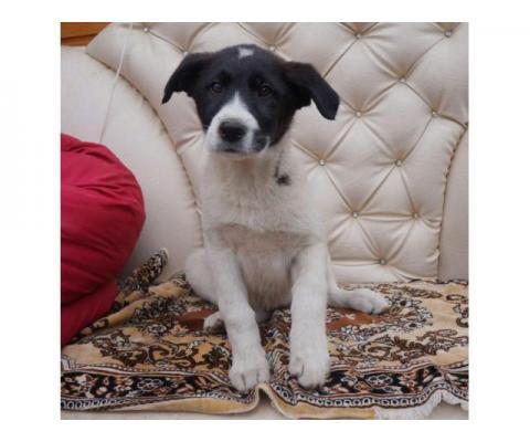 Пятнышко, щенок 4х месяцев ищет дом