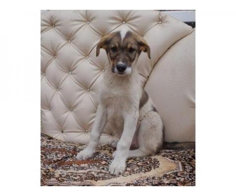 Кроша, щенок 4х месяцев ищет дом