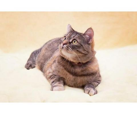 Шикарная кошка Нина Ивановна ищет свою семью!