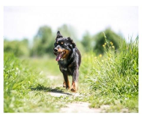 Маленький, ласковый пес Тимон (1,5 года и 11 кг) ищет семью.