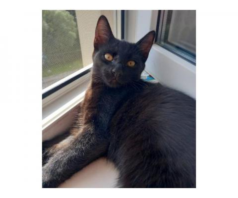 Симпатичный котёнок Черныш