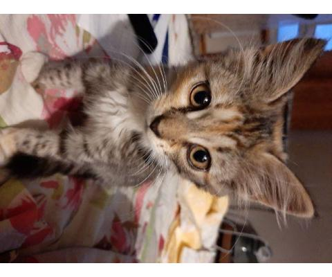 Котёнок девочка ищет добрых родителей