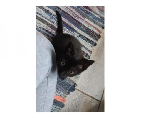 Кошечка Мия ищет дом!