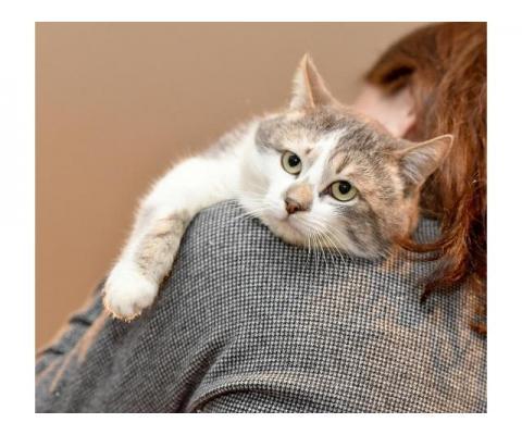 Котик Вильям в добрые руки
