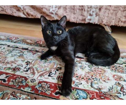 Котенок Карамелька, 5 месяцев.