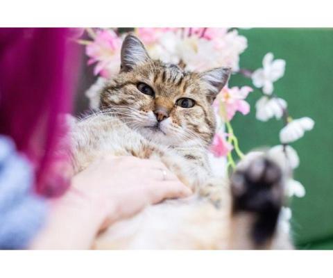 Чудо кот Тотоша в добрые руки!