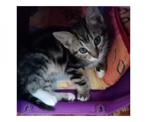 Симпатичные маленькие котята разного окраса