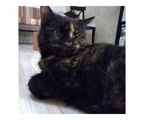 Кошка в номинации