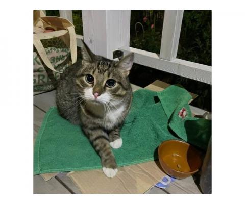 Ищет дом котик  Проша.