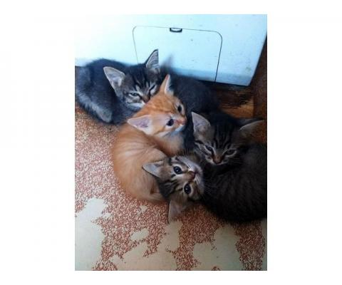 Отдадим славных котят в хорошие руки