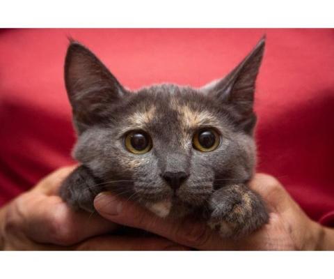 Симпатичные  котятки в дар