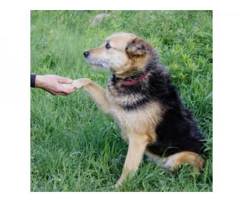 Моника-добрая, робкая, нежная собака-компаньон