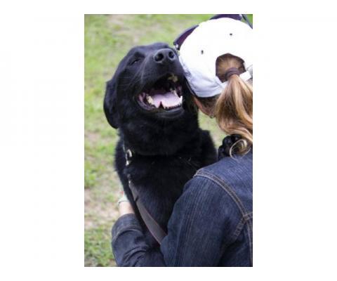 Жасмин- ооочень ласковая человекориентированная собака