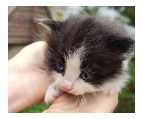 Дачные котята  ищут дом