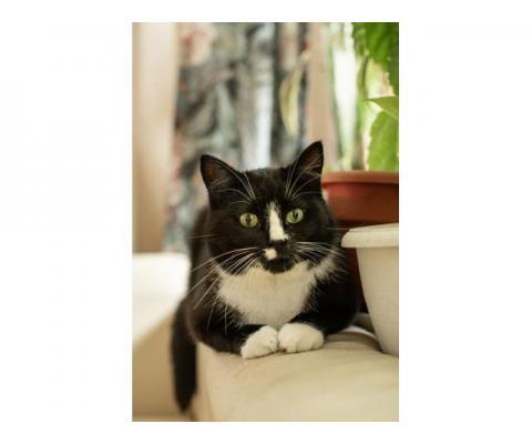 Плюшевый котик Маркиз ищет дом